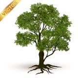Beau vecteur d'arbre sur un fond blanc Image libre de droits