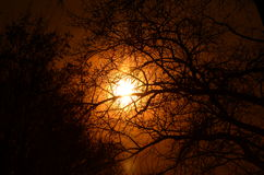 Beau vecteur de ciel et d'arbres Photographie stock libre de droits