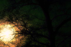 Beau vecteur de ciel et d'arbres Image stock
