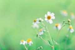 Beau vert de nature de fleur d'herbe avec le fond de tache floue Images stock