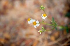 Beau vert de nature de fleur d'herbe avec le fond de tache floue Photographie stock