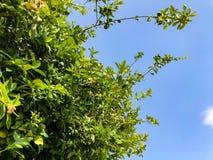 Beau vieil arbre en parc contre le ciel Fermez-vous vers le haut du tir Photographie stock