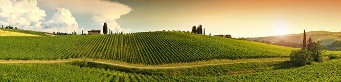 Beau vignoble dans le chianti, Toscane l'Italie images libres de droits