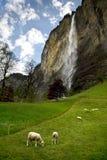 Beau village de Lauterbrunnen, Suisse Image libre de droits