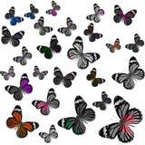 Beau vol commun de Tiger Butterflies dans des RP de couleur de gamme de gris Photographie stock libre de droits