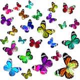 Beau vol commun de Tiger Butterflies dans la couleur d'échelle de devine Photos stock