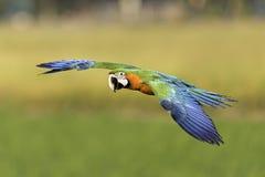 Beau vol d'oiseau sur le fond de nature image stock