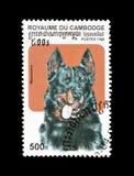 Beauceron pies na znaczku pocztowym obrazy stock
