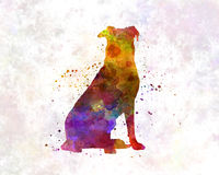 Beauceron in watercolor Stock Photo