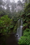 Beauchamp waterfall in lush rainforest. Dramatic Beauchamp waterfall in the lush otways national park along the great ocean road in Australia. Waterfall is Royalty Free Stock Photography