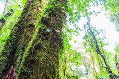 Beaucoup arbre dans la forêt tropicale tropicale Images stock