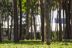 Beaucoup arbre dans le jardin Photos libres de droits