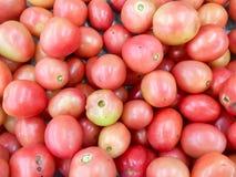 Beaucoup boule rouge de tomate, plan rapproché de photo beaucoup goût frais organique propre Photos libres de droits