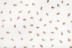 Beaucoup bourgeon floraux roses sur le fond de livre blanc Images stock