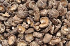 Beaucoup champignon de couche de Shiitake sec Photographie stock