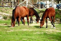 Beaucoup cheval dans le ranch Photographie stock libre de droits