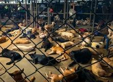 Beaucoup chien sans abri images stock