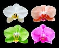 Beaucoup colorent de belles fleurs d'orchidée réglées Image stock