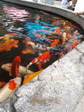 Beaucoup d'écrevisses si mignonnes dans l'eau image stock