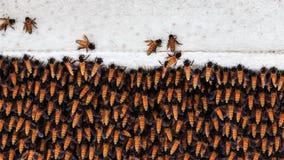 beaucoup d'abeilles dans la ruche sur le haut bâtiment Images libres de droits