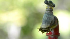 Beaucoup d'abeilles recueillant l'eau au robinet d'égoutture banque de vidéos