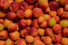 Beaucoup d'abricots couverts de taches de rousseur juteux image stock