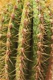 Beaucoup d'aiguilles de cactus Images libres de droits