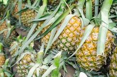 Beaucoup d'ananas Image libre de droits