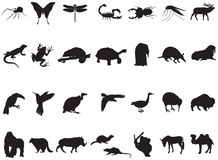 Beaucoup d'animaux et d'insectes dedans Photos stock