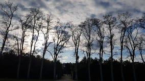 Beaucoup d'arbres et ciel de soirée dans Boboli font du jardinage image libre de droits