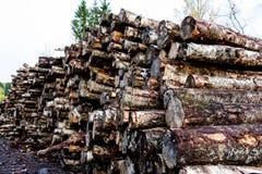 Beaucoup d'arbres sciés sur une notation photo libre de droits