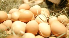 Beaucoup d'emballage eggs dans la ligne sur la stalle au marché Lancez le support sur le marché avec des paquets des oeufs, macro banque de vidéos