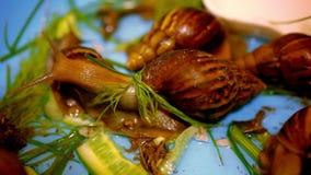 Beaucoup d'escargots rampant et mangeant des usines Macro clips vidéos