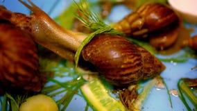 Beaucoup d'escargots rampant et mangeant des usines Macro banque de vidéos