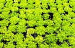 Beaucoup d'herbe Image libre de droits