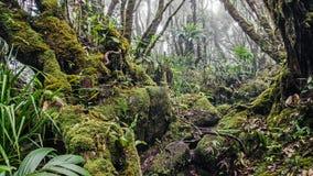 Beaucoup d'humidité dans la forêt images stock