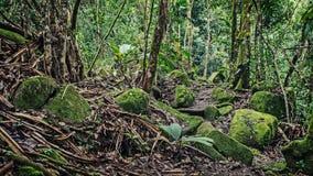 Beaucoup d'humidité dans la forêt photo libre de droits