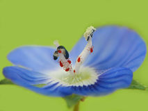 Beaucoup d'insectes rouges Photographie stock
