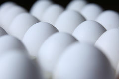 Beaucoup d'oeufs blancs Photo libre de droits