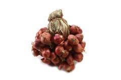 Beaucoup d'oignons rouges sur un contexte blanc Images stock