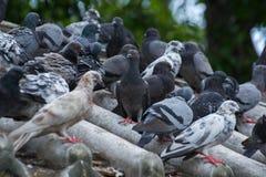 Beaucoup d'oiseaux Images libres de droits