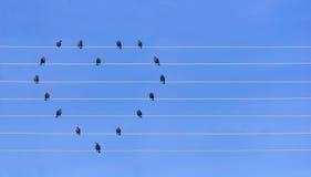 Beaucoup d'oiseaux se reposant aux fils sous la forme de coeur Photographie stock