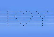 Beaucoup d'oiseaux se reposant aux fils sous la forme de coeur et de mots Images stock