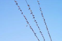 Beaucoup d'oiseaux sur des fils Image stock