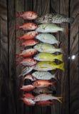 Beaucoup de beaux poissons propagés la plate-forme photographie stock libre de droits
