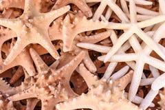 Beaucoup de belles étoiles de mer de deux sortes Photographie stock