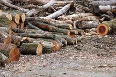 Beaucoup de bois de construction dans une jungle photographie stock libre de droits