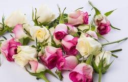 Beaucoup de boutons de rose légèrement fanés sur le blanc Images stock