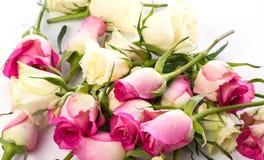 Beaucoup de boutons de rose légèrement fanés sur le blanc Photo libre de droits