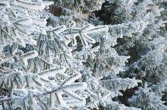 Beaucoup de branches de sapin dans la neige Image stock